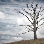 Photo d'un arbre mort
