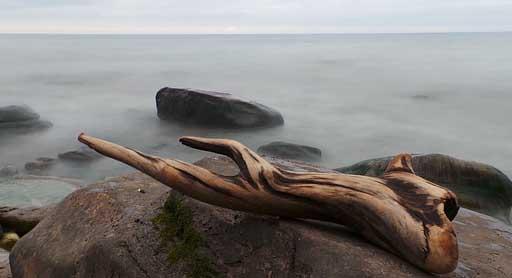 Photo d'un bois flotté au bord de merd