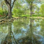 Entretien d'étang : Comment entretenir son étang ?