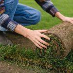 un rouleau de gazon qu'un homme plante
