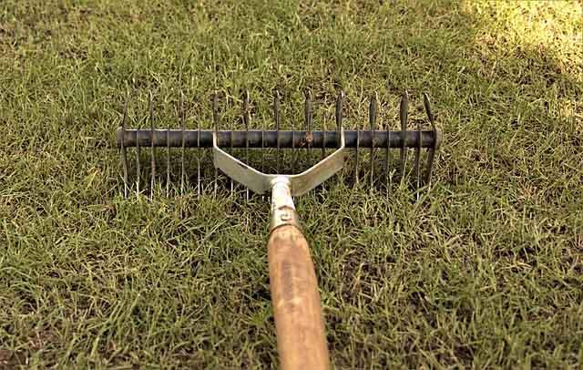 Scarifier la pelouse : mode d'emploi