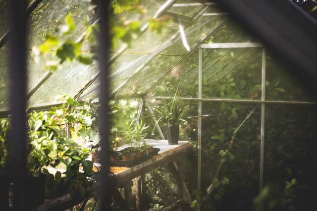 Serre de jardin en verre ou en polycarbonate ?