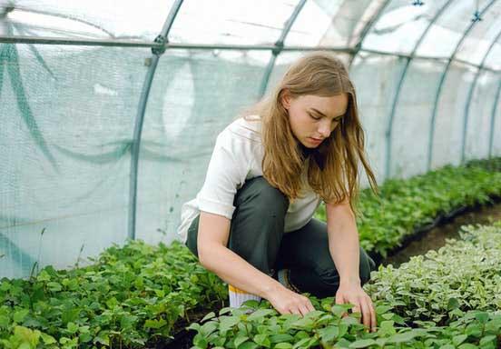 Une maraîchère qui fait pousser ses légumes sous une serre