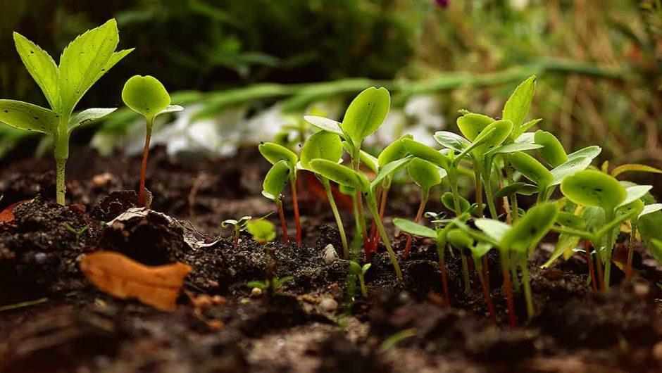 Comment faire un jardin de permaculture ?