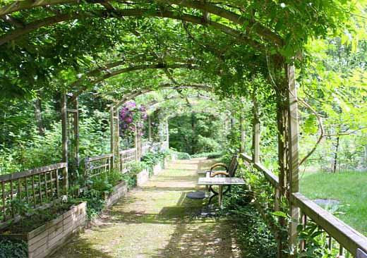 Image d'une terrasse couverte de plantes