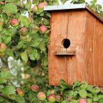une cabane à oiseaux en bois dans un pommier
